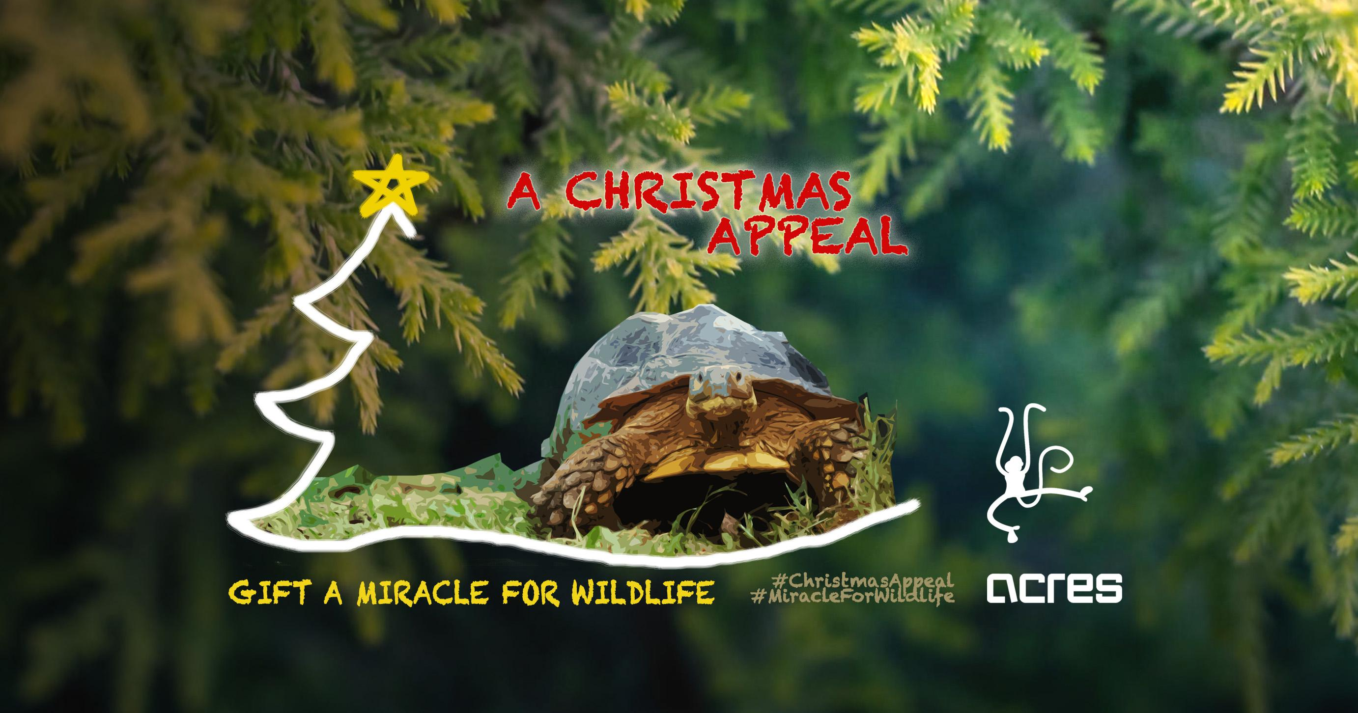 A CHRISTMAS APPEAL FOR ANIMALS By ACRES